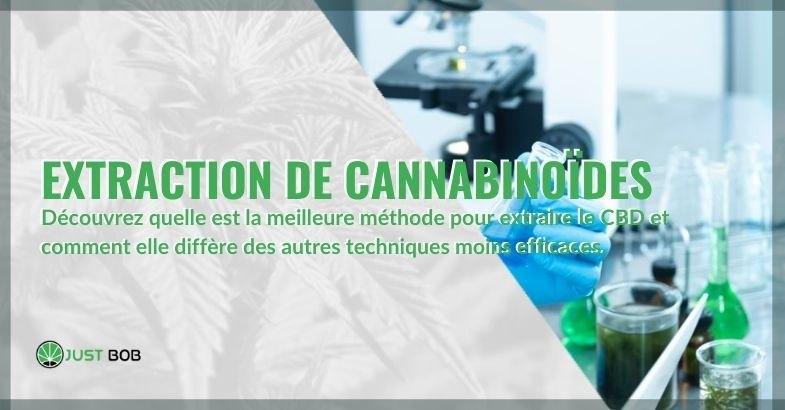 Extraction des cannabinoïdes : quelle est la meilleure méthode ?