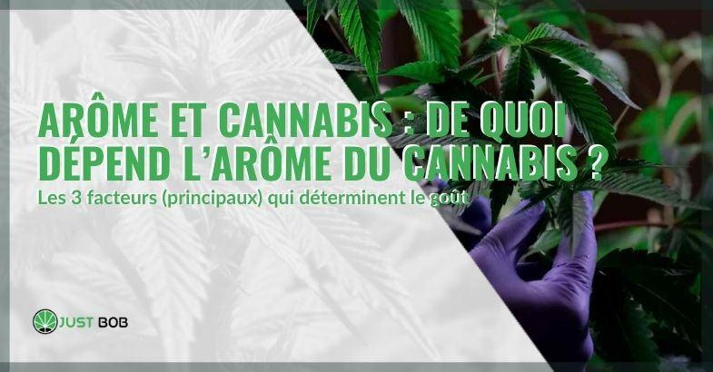 L'arôme du cannabis est principalement donné par 3 facteurs.