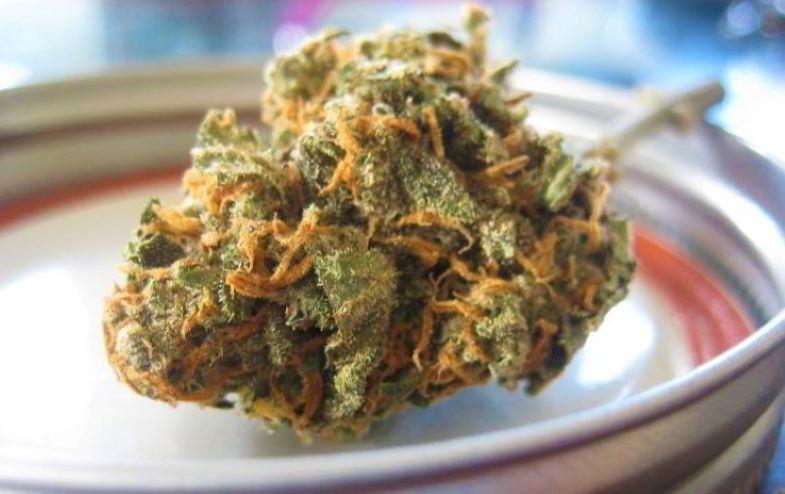 Culture biologique et arômes de cannabis léger