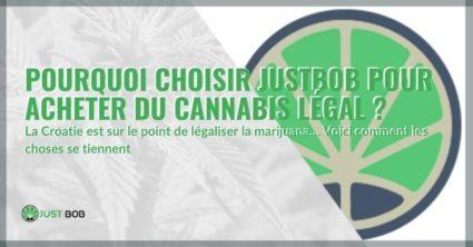 Justbob pour acheter du cannabis légal : pourquoi le choisir.