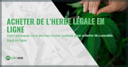 Acheter du cannabis CBD en ligne