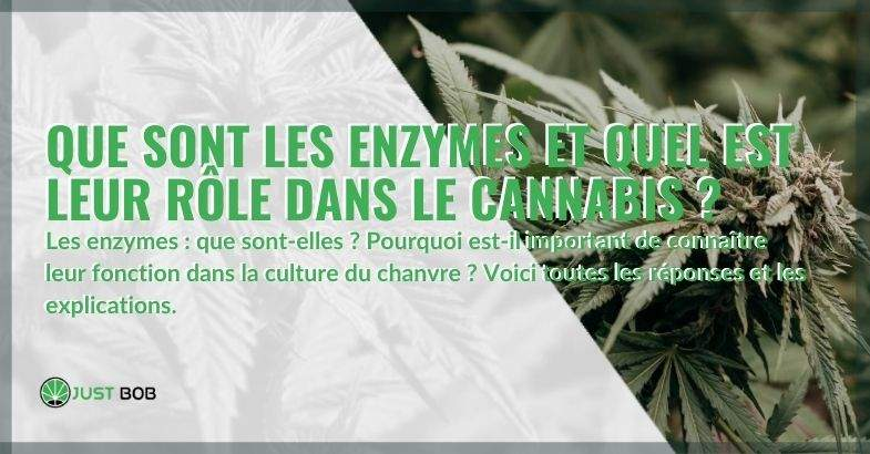 Enzymes : l'importance et le rôle dans le cannabis