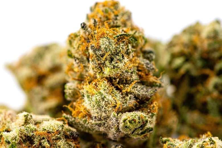 L'excellente qualité et le bon prix de la marijuana légale avec Justbob
