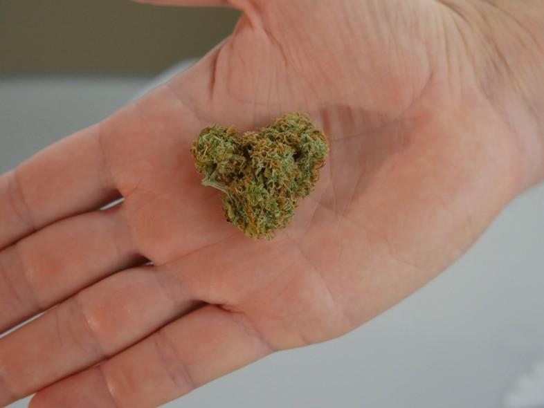 La meilleure qualité de marijuana légale