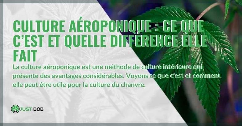 La culture aéroponique est-elle ainsi et quels sont ses avantages ?