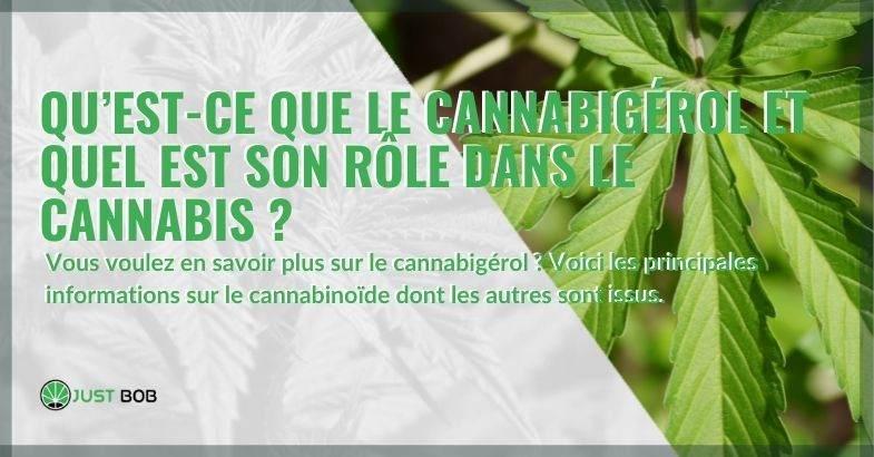 Qu'est-ce que le cannabigérol, le cannabinoïde qui donne naissance à d'autres cannabinoïdes ?