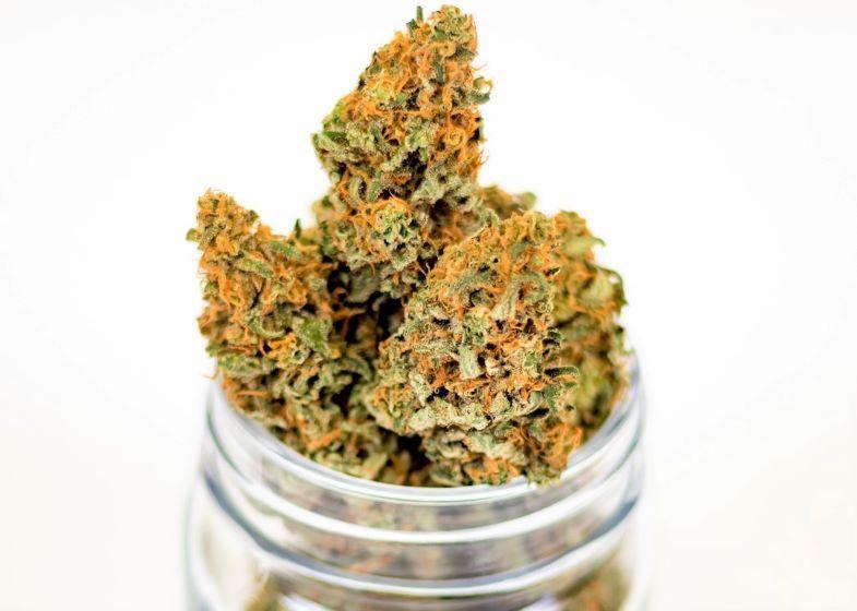 Comment reconnaître une tête de cannabis de qualité