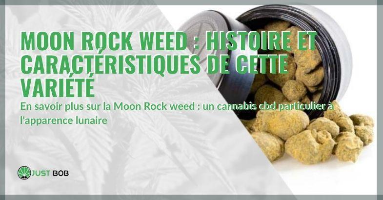 L'histoire et les caractéristiques du cannabis Moon Rock Weed