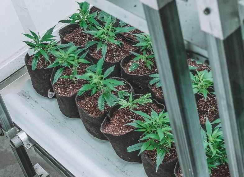 Pots en tissu pour oxygéner les racines de cannabis