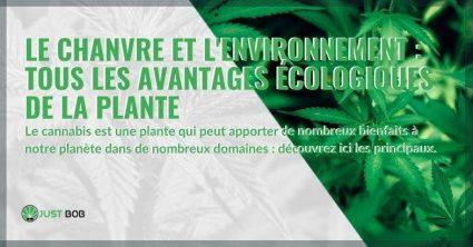 Tous les avantages que la plante de chanvre apporte à l'environnement