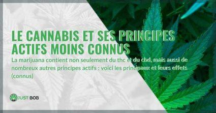 Les principes actifs moins connus du cannabis et leurs effets