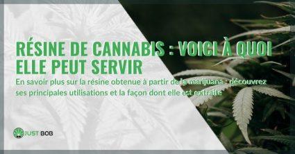 Voici à quoi sert la résine de marijuana et comment elle est extraite